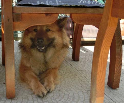unter´m Tisch ist es super - Schatten!!!