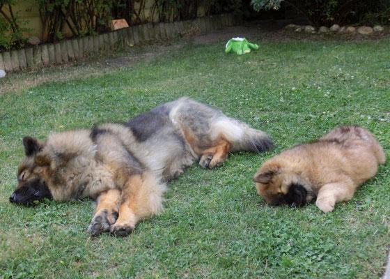 ... Ylvi & Bia beim Synchron-Schlafen ;-))))