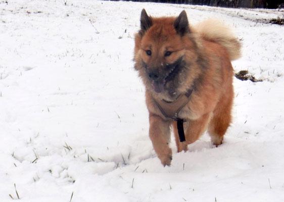 Bia hat Spass im Schnee
