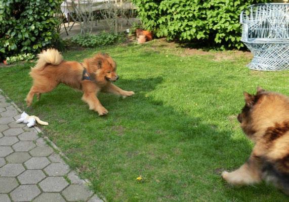 Mexx und Ylvi toben durch den Garten