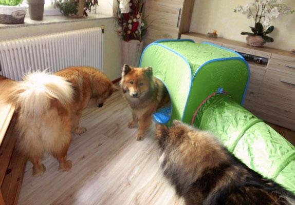 Ronja und Ylvi sind auch neugierig