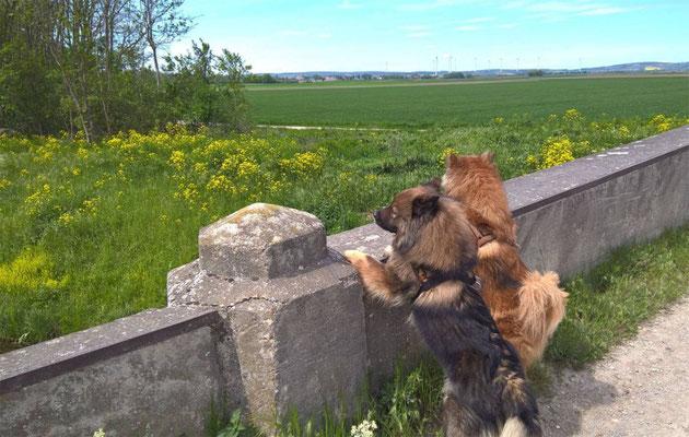 Ylvi & Rónja sind neugierig