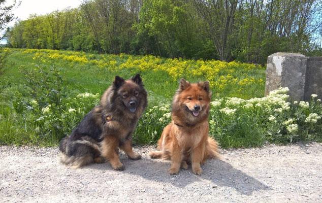 Ylvi & Ronja (Mai 2017)