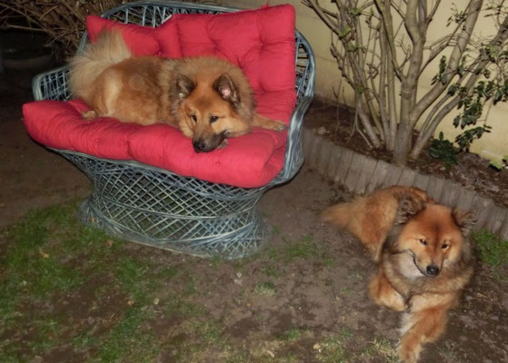 Bia und Ronja abends im Garten (22. März)