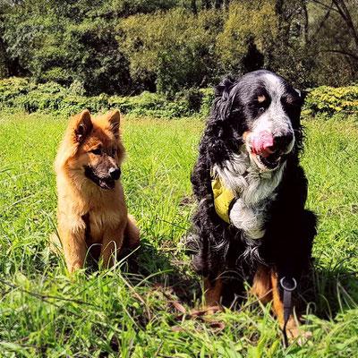 CERA und ihr großer Freund FRODO