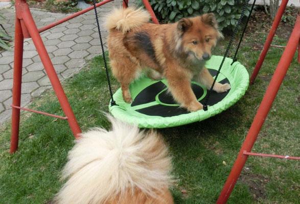 Ronja balanciert auf der Schaukel - die werdenden Mama wollte das jetzt nicht ;-)))