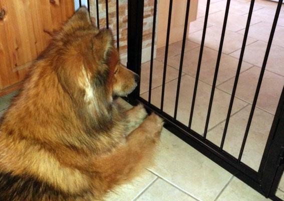 Ronja würde sooo gerne die Gittertüre öffnen :-)))))))