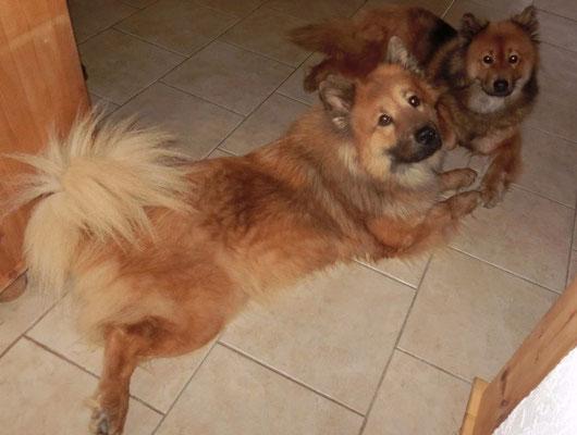 Bia mag die Nähe zu Ronja, sie liegt oft auch Pfote-an-Pfote mit ihr :-)