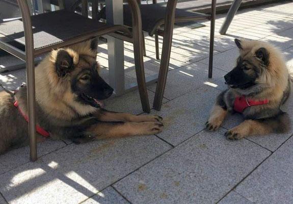 COMO & seine Schwester Ciara-LUMA