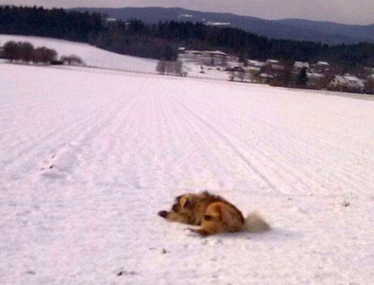 Alvo nimmt ein Schneebad (Jänner 2017)