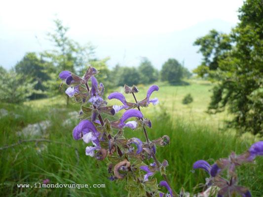 Parco dell'Alto Garda- Cima Vesta