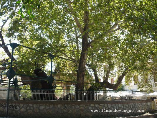 Kos città- l'albero di Ippocrate