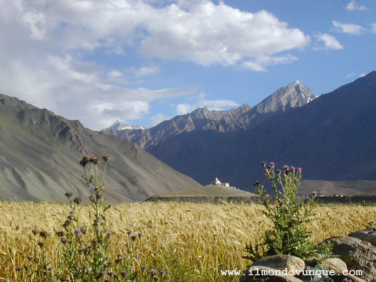 Nella valle dello Zanskar- Pipiting- Ladakh- India