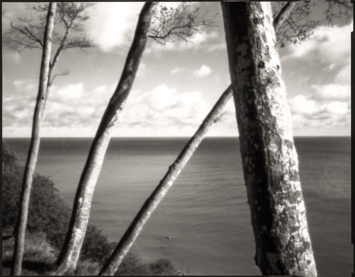 Beech trees and Baltic Sea, Isle of Ruegen