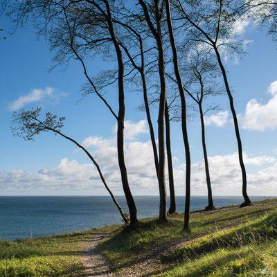 Beech trees and Baltic Sea, Isle of Ruegen