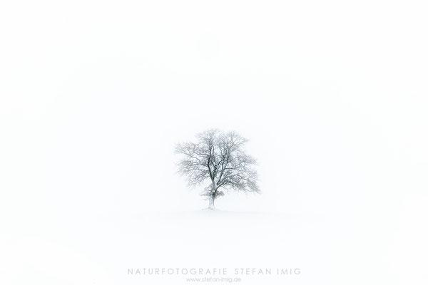 20201209-Obstbaum im Schnee-9972