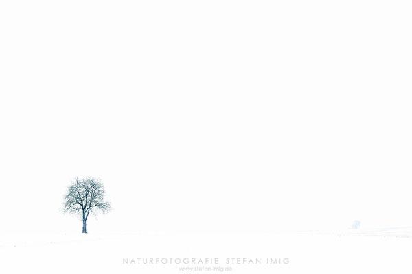 20201201-Winterliche Felder-8518524