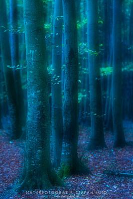 20191020-Mystischer Wald-2346
