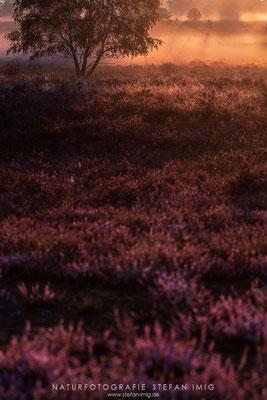 20200829-Sonnenaufgang in der Heide--2