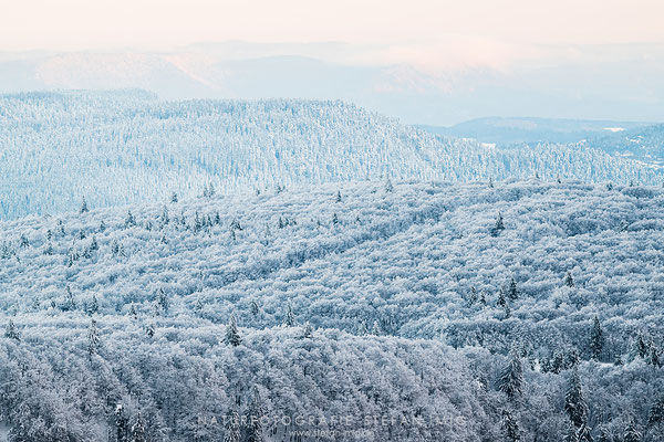 20191120-Winter in den Vogesen-8511258