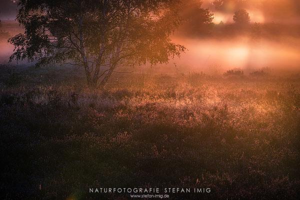 20200829-Sonnenaufgang in der Heide-
