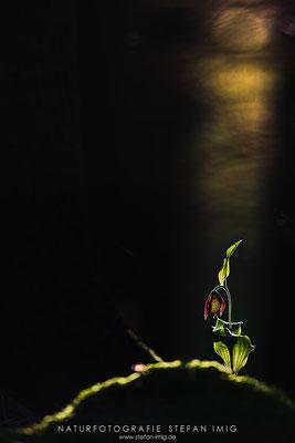 20180526-Spotlight-8502417