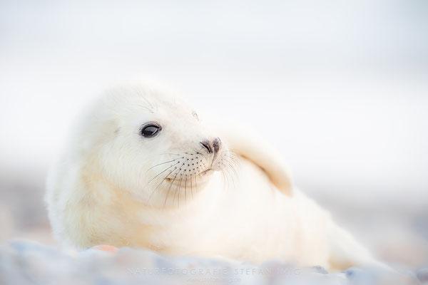 20111229-Seal Pup-3029