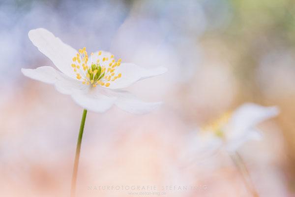 20150409-Spring Duet-0712