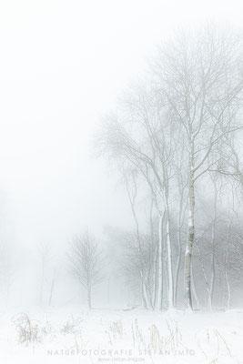 20201209-Birken im Nebel 2-0001