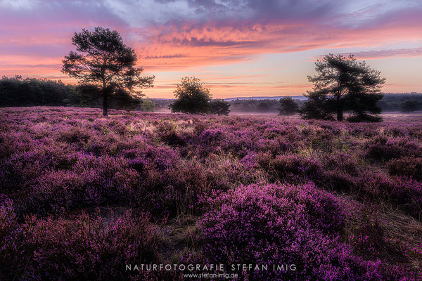 20200903-Sonnenaufgang in der Mehlinger Heide-