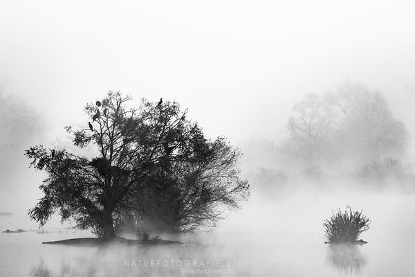 20131031-Cormorant in the Mist-8004060
