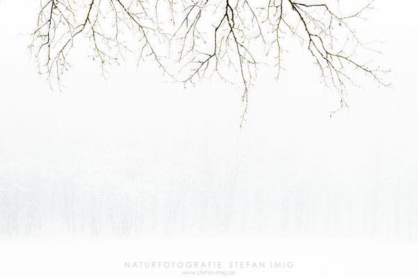 20201209-Winter im Wald-0092