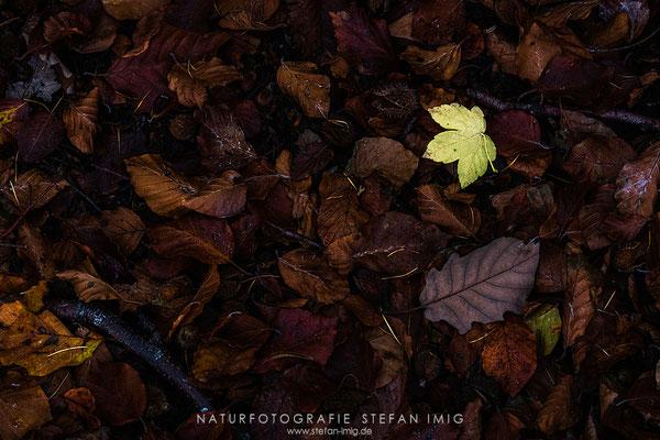 20191020-Waldbodendetail-2383