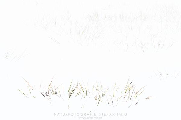 20201209-Gras im Schnee-8518782