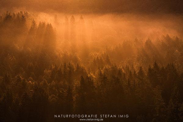 20190816-Nebelmorgen-8523647