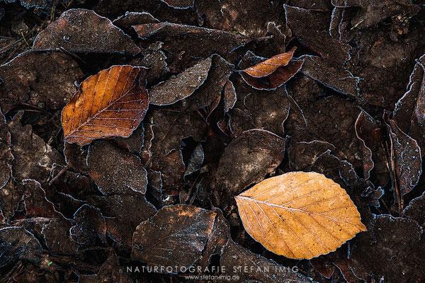 20140208-Frosty Leafes-8005600