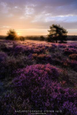 20200903-Sonnenaufgang in der Heide-