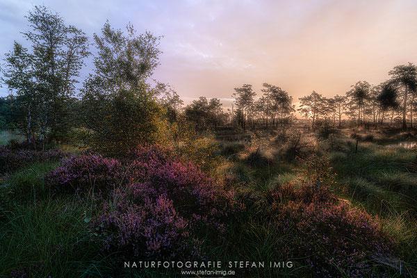 20200824-Sonnenaufgang im Moor--2
