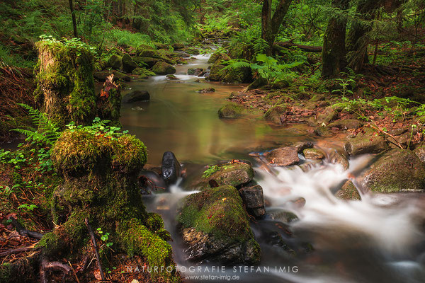 20110624-Little Creek-8694
