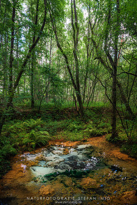 20200828-Quelle im Wald-