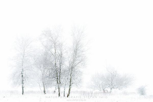 20201209-Birken im Nebel-8518828