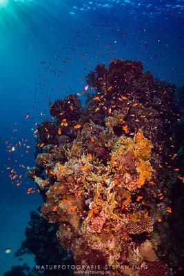20160106-Korallenriff-05634