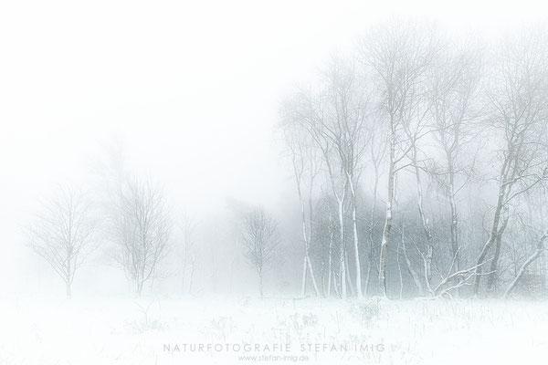 20201209-Birkenim Nebel 3-0005