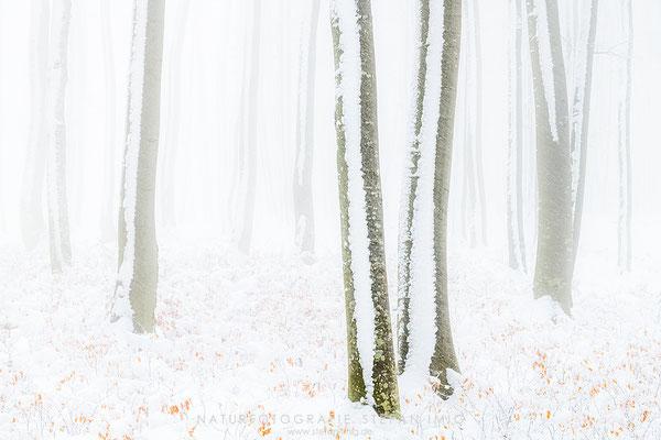 20201209-Winter im Buchenwald-8518639