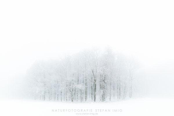 20201209-Winterlicher Waldrand-0103