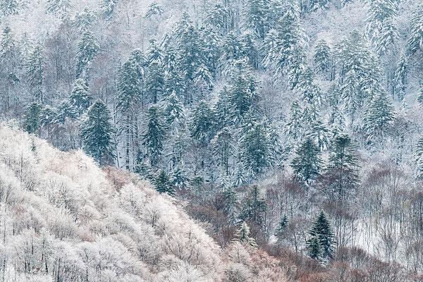 20191120-Winter in den Vogesen-8511334