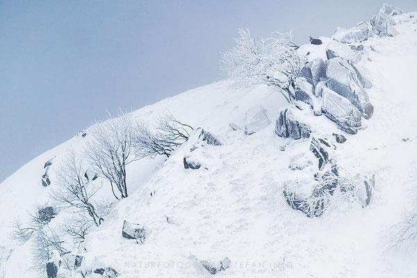 20191119-Gams im Winter-3822