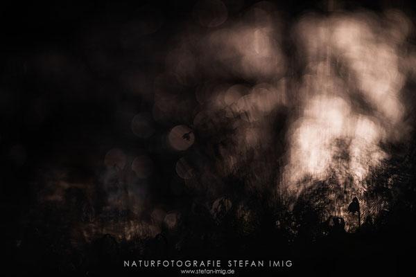 20190308-Märzenbecher Silhouette-8504504