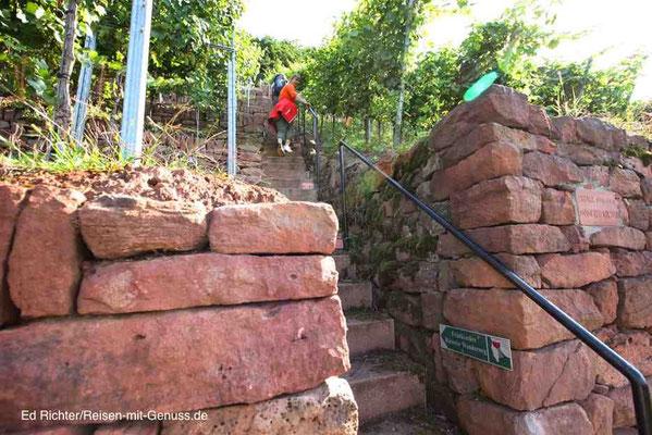 Grüne Schilder mit dem Rotwein im Römer weisen den richtigen Weg auf dem Rotweinwanderweg