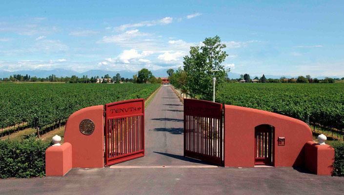 Das Tor zur Tenuta Santomè. Das Weingut ist von Weinreben umgeben